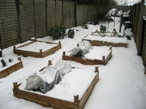 Raised beds in the snow