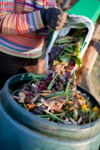 Kitchen waste into compost bin