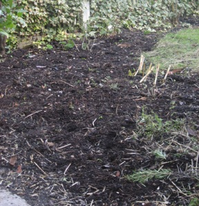 Herb and flower bed mulched with our own compost