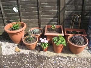 New pots for the patio area
