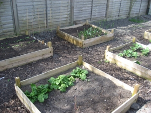 Our raised beds in March