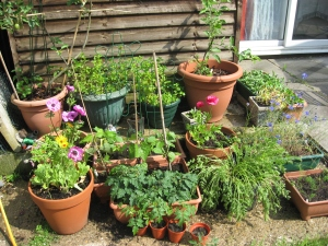 Patio pots doing well - can just see tomatoes & carrots