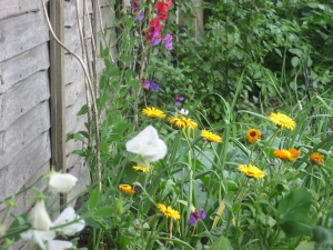 Flowers to help attract wildlife in full bloom