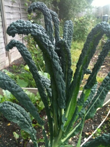 Beautiful Cavolo Nero