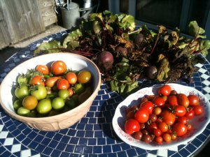 Final Harvest - Beetroot and Tomatoes