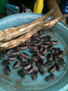 Saving runner bean seeds
