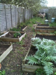 Tidied raised beds ready for another year of vegetable growing